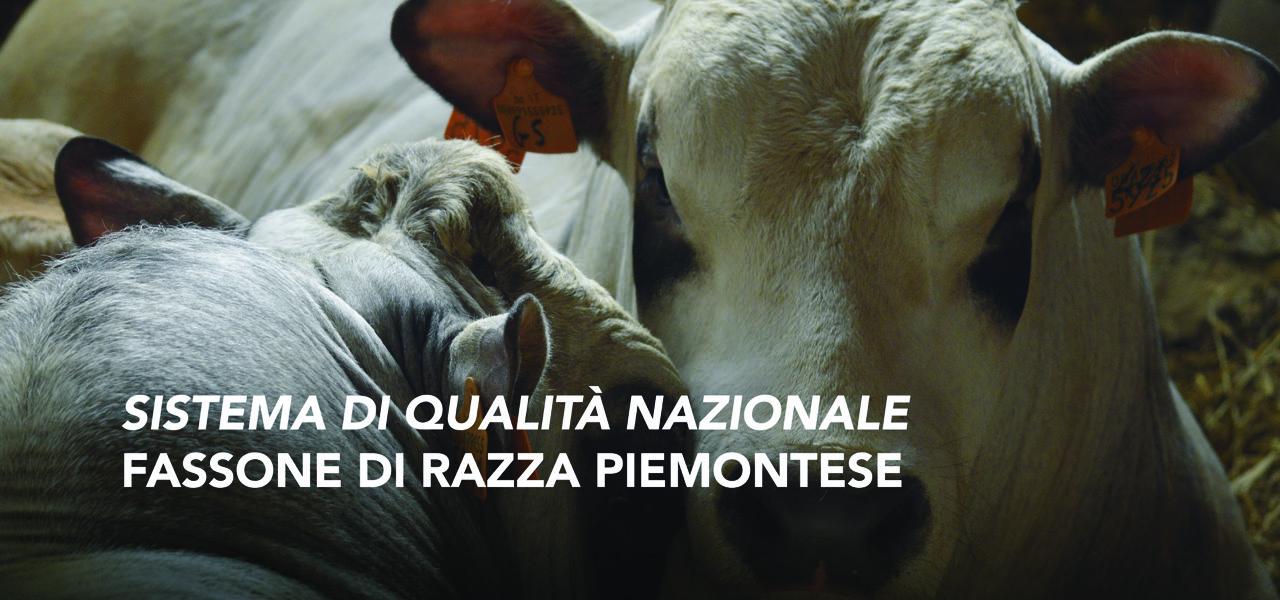 SQNZ Fassone di Razza Piemontese